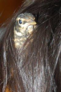 Rimple in hair