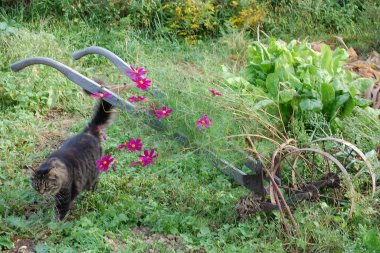 Sept.garden